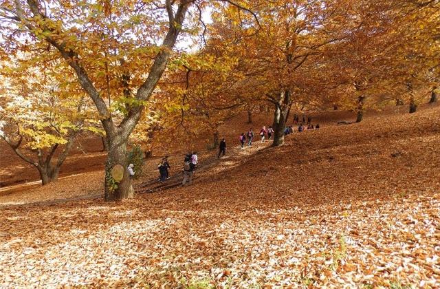 Senderismo bosque de cobre