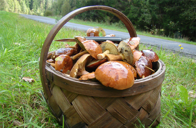 Mycology: 9 locations in Andalusia to enjoy collecting mushrooms: Cesta de setas