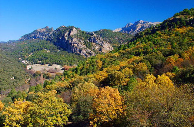 Mycology: 9 locations in Andalusia to enjoy collecting mushrooms: Sierra de Cazorla