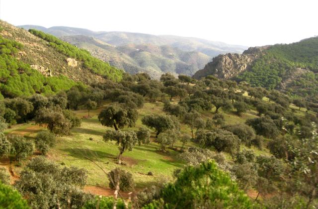 Pilztourismus: 9 Orte in Andalusien zum Pilzesammeln: Sierra Morena