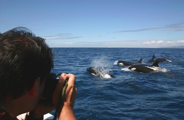 10 activities for all the family in Costa de la Luz: Estrecho de Gibraltar Imagen de Cadizturismo.es