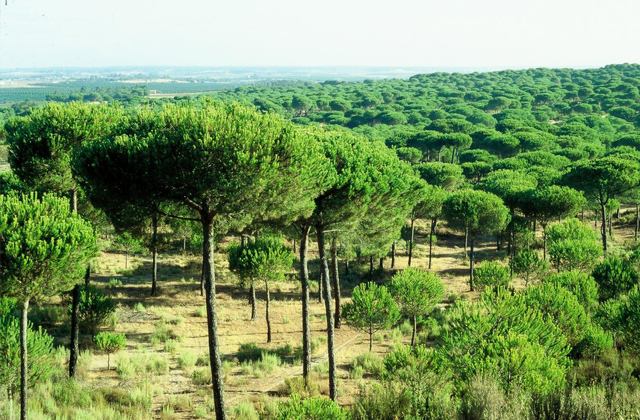 things to see and do to have a dream holiday in El Rompido: Pinares de Cartaya