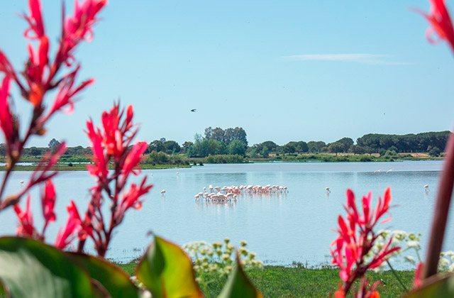 Activités pour la famille sur la Costa de la Luz - Parque Nacional de Doñana