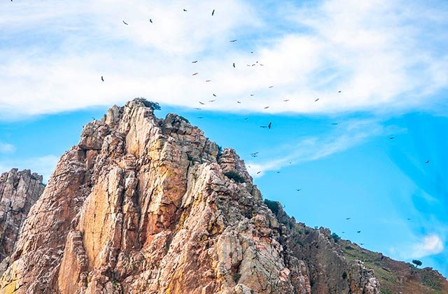 Avistamiento aves Sierra de Grazalema