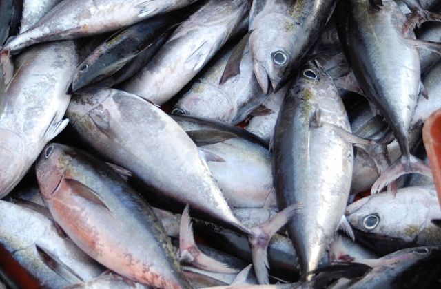 7 'Superfoods' you should incorporate into your diet: Pescado azul