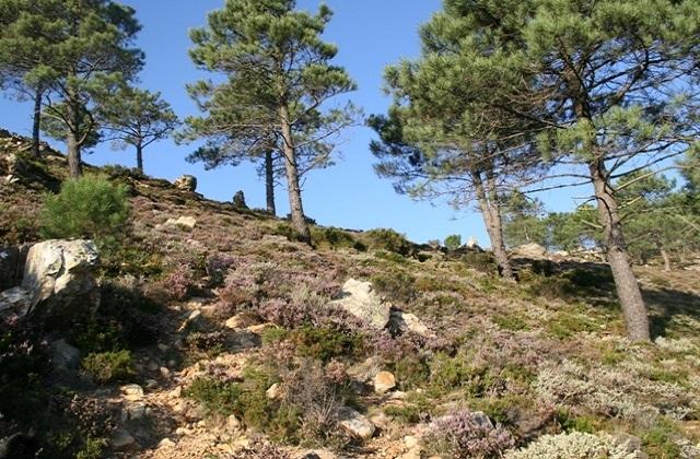 Rutas de senderismo en Andalucía - SENDERO SEÑALIZADO LAS QUEBRADAS