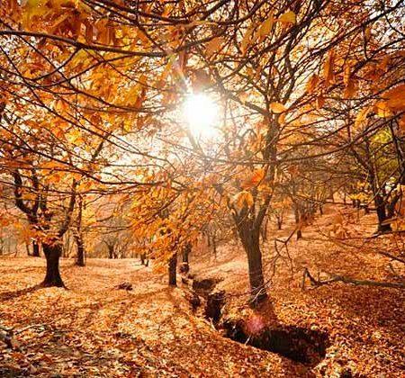 bosque de cobre Málaga