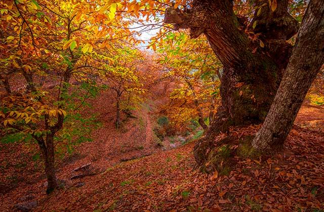 bosque de Genal