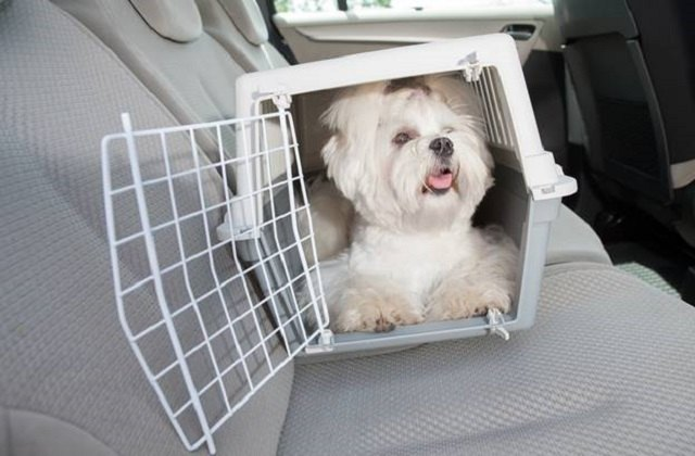 Post Holiday Travel With Dogs pet 3