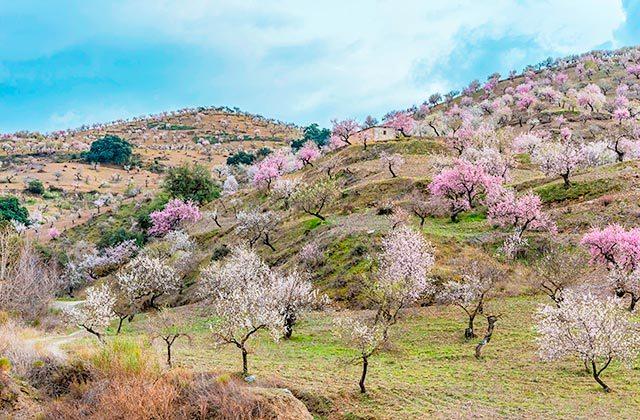 Ruta de los Almendros Málaga