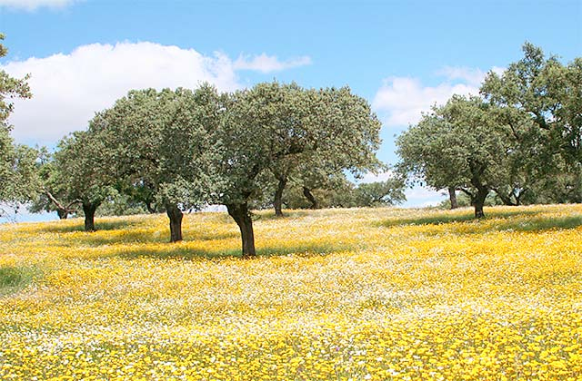 Sierra de Aracena primavera