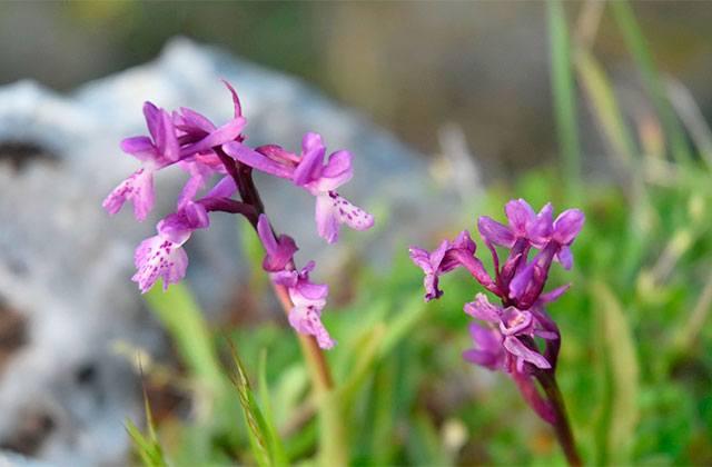 orquídeas Sierra de Grazalema