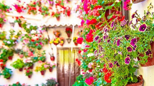 primavera en Andalucia