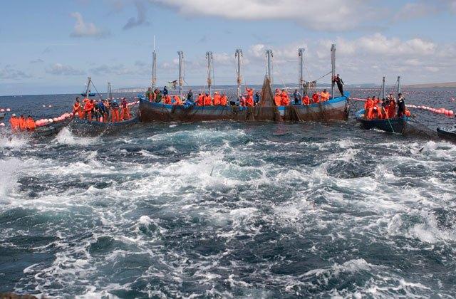 Ruta del atún en Conil - pesca almadraba