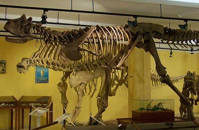Museo-Paleontologico-estepona