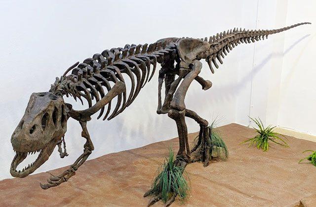 Museo Paleontológico de Estepona