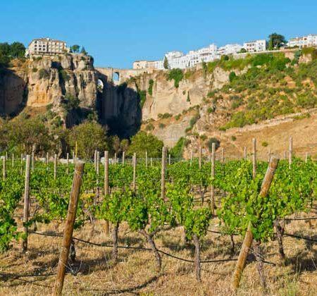 Ruta del vino y bodegas en Ronda