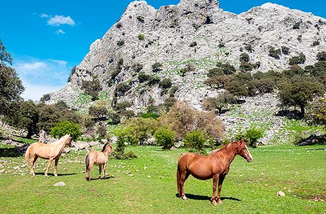 rutas a caballo Grazalema
