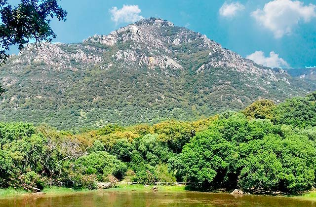 Parque Natural de Los Alcornocales el Aljibe