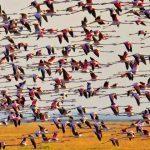 turismo ornitológico Huelva