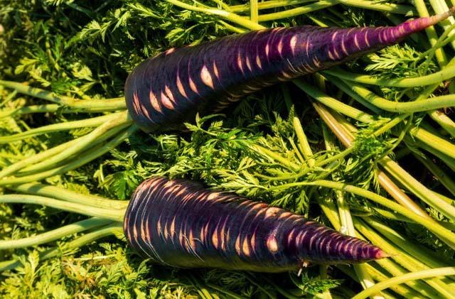 productos autóctonos - Zanahoria Morá