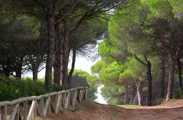 Parque Natural La Breña, Cádiz