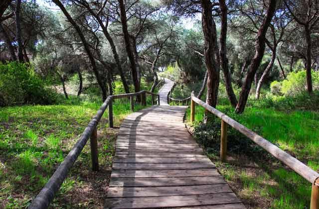 pinar Doñana