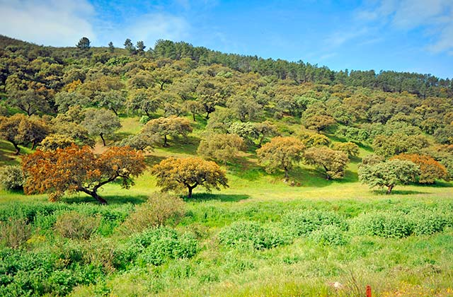 Parque Natural Sierra de Aracena