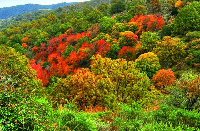 Bosques en Andalucía - Bosque Encantado de Lugros