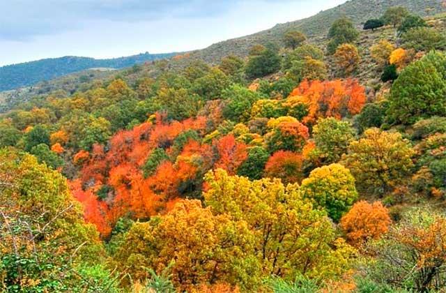Bois de l'Andalousie - Bosque Encantado de Lugros (Granada)