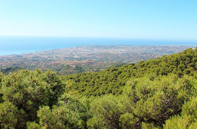 Bosque de pino mediterráneo, Sierra de Mijas (Málaga)
