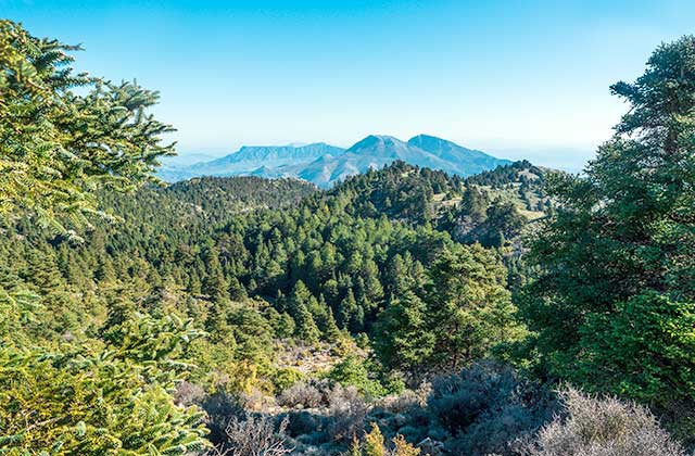 Bois de l'Andalousie - Bosque de pinsapos, Sierra de las Nieves (Málaga)