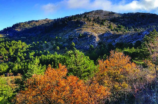 Bosques en Andalucía - Bosque de rocas en el Torcal de Antequera