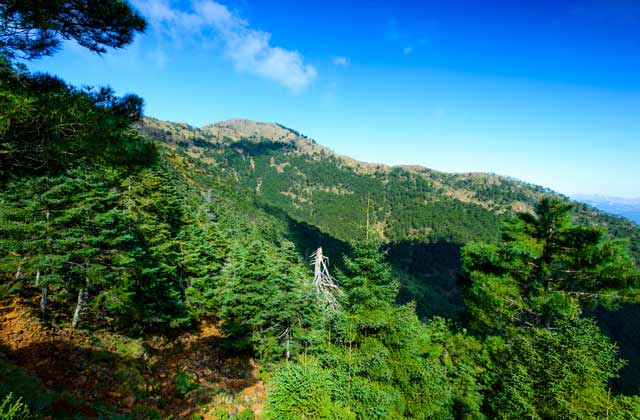 Bois de l'Andalousie - Sierra Bermeja