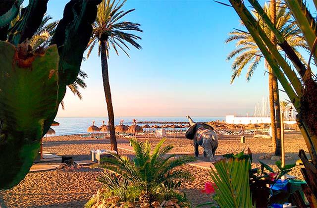 Ver un elefante en la playa