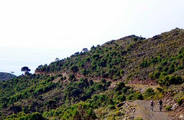 Camino de la Artesa - Fotografía Estepona Natural - www.estepona-natural.es