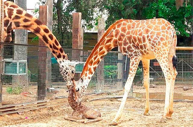 Activités pour la famille sur la Costa de la Luz - Zoo de Jerez - foto elmira.es