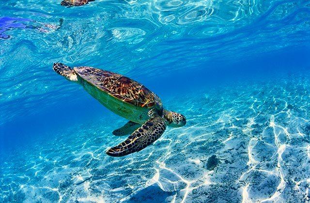 Océanos sostenibles