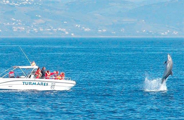 Avistamiento de cetáceos Marbella