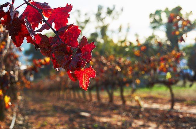 Ruta del vino Málaga